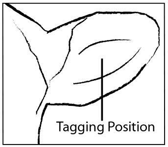 how to fit male tag instructions